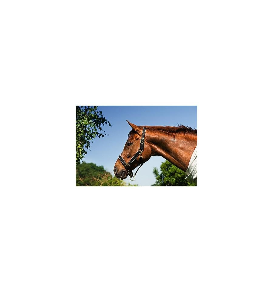 Ohlávka Riding World-Doprodej - Jezdecké potřeby Brno 2b6ce8ed22